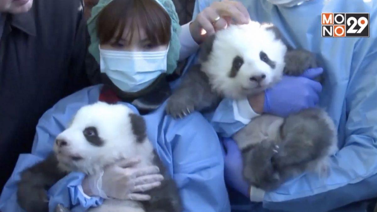 สวนสัตว์กรุงเบอร์ลินเผยชื่อลูกแพนด้าแฝด