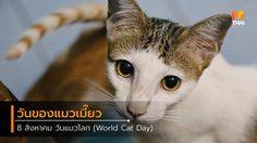 8 สิงหาคม วันแมวโลก วันของแมวเมี๊ยว 1 วัน
