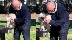 มนุษย์ลุงออสเตรเลีย ล้างก้นสุนัข ด้วยน้ำพุสาธารณะสำหรับดื่ม