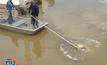 ปลากระเบนตายเกลื่อนแม่น้ำแม่กลอง