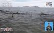 วาฬเกยตื้นที่หาดในเม็กซิโก ตาย 24 ตัว