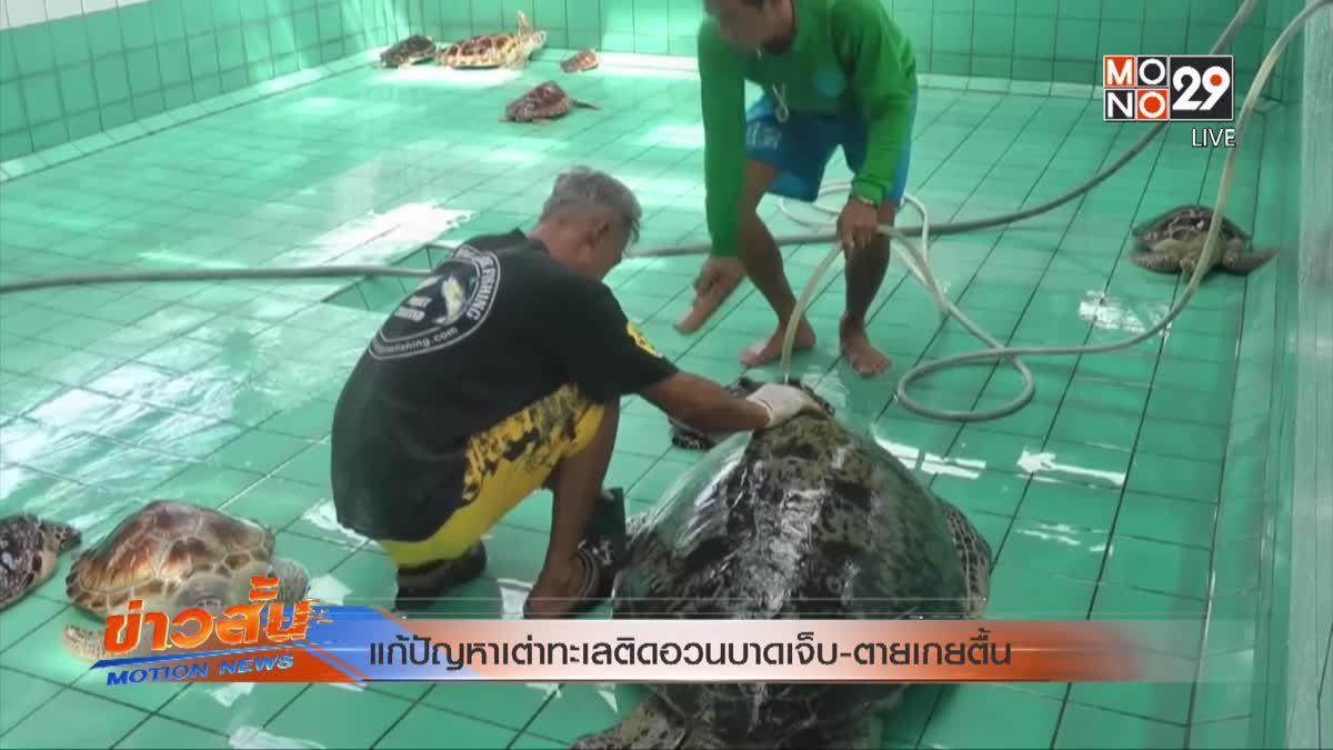 แก้ปัญหาเต่าทะเลติดอวนบาดเจ็บ-ตายเกยตื้น