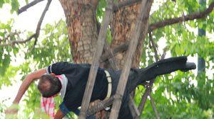ลุงวัย 70 เครียดโดนยึดที่ดิน ปีนต้นไม้หน้ากพ. หวังผูกคอ ช่วยทันหวุดหวิด