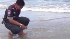 เตือนนักท่องเที่ยวระวังแมงกะพรุนไฟ ชายทะเลปราณบุรี