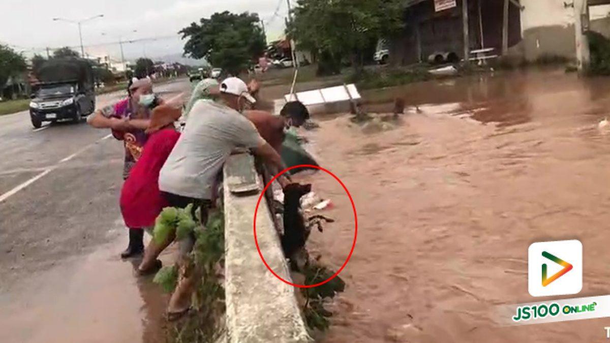 วินาทีชีวิต ชาวบ้านช่วยน้องหมาถูกน้ำป่าพัด ที่ลำสนธิ จ.ลพบุรี