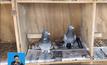 นกพิราบแยกแยะคำที่สะกดถูกได้
