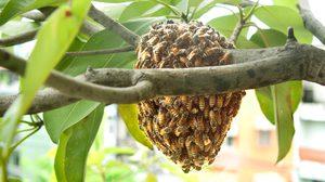 เคล็ดลับ ไล่ผึ้ง แบบง่ายๆ ด้วยวิธีธรรมชาติ