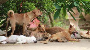 พบโรคพิษสุนัขบ้าระบาดอีก 5 หมู่บ้านในโคราช