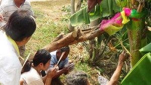 แห่ขอเลข! 'ต้นกล้วยประหลาด' ชาวบ้านบอกแม่นจริง