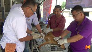 ปศุสัตว์ จ.ตรัง รับมีสุนัขฉีดวัคซีนตาย ยันไม่เกี่ยววัคซีนเสื่อม