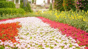 Garden In The Sky สวยลอยฟ้าแห่งใหม่ เข้าชมได้ตลอดปีที่ สวนนงนุช พัทยา