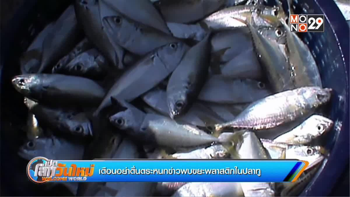 เตือนอย่าตื่นตระหนกข่าวพบขยะพลาสติกในปลาทู
