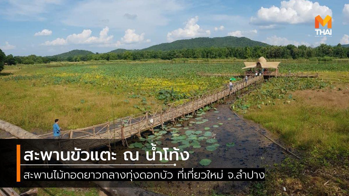 สะพานขัวแตะ ณ น้ำโท้ง ทอดยาวกลางทุ่งดอกบัว ที่เที่ยวใหม่ จ.ลำปาง