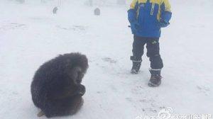 """น่าสงสาร! """"ลิงป่า"""" เขาง๊อไบ๊ ดั้นด้นขอความช่วยเหลือจากคน"""