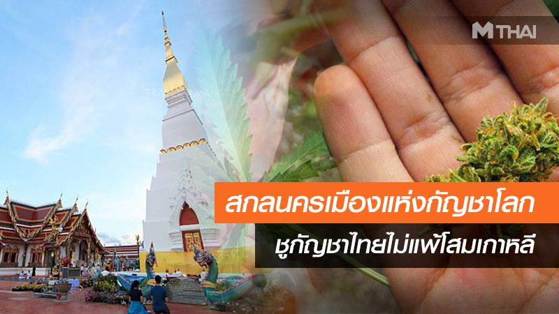 ว้าววว สกลนครเมืองแห่งกัญชาโลก กัญชาไทยไม่แพ้โสมเกาหลี