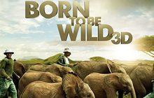 Born to Be Wild ผจญภัยสัตว์โลกทะลุจอ