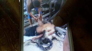 สยอง! งูหลามเลื้อยรัด ชายวัย 55 เสียชีวิตคาบ้านพัก ต่อหน้าพี่สาว