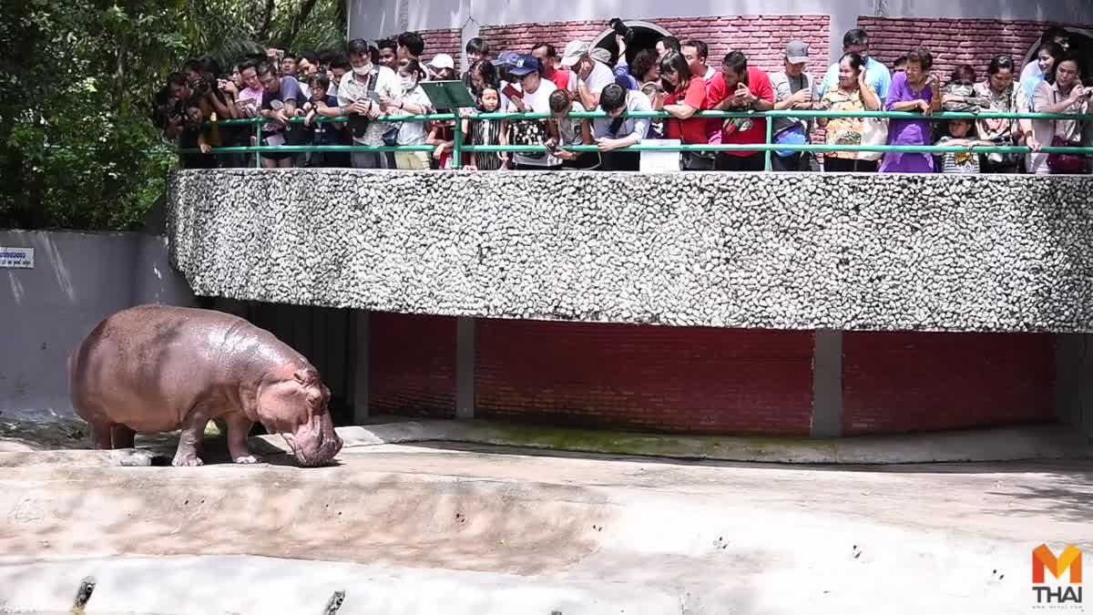 สวนสัตว์ดุสิต ฉลองวันเกิด 'แม่มะลิ' ฮิปโปฯ อายุยืนที่สุดในประเทศไทย