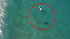 นักโต้คลื่นออสซี่รอดตายจากฉลาม หลังมีคนแจ้งเตือนภัยผ่านโดรน