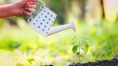 5 วิธี รดน้ำต้นไม้ เมื่อไม่มีใครอยู่บ้าน