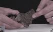 ค้นพบฟอสซิลเนื้อเยื่อสมองไดโนเสาร์ครั้งแรก