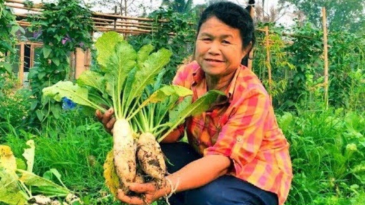วิธีปลูกหัวไชเท้า หัวผักกาด / How to grow radishes / 如何种萝卜