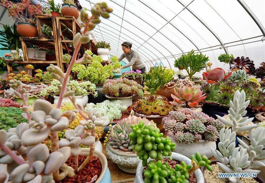 ต้นไม้เงินล้าน! หญิงจีนทุ่มกายใจ ปลูกธุรกิจสีเขียว โกยรายได้ก้อนโต