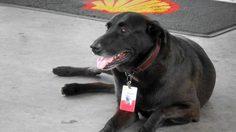 """ความน่ารักของ """"Negao"""" สุนัขที่เคยถูกทิ้ง ก่อนมาเป็นหมาปั๊ม"""