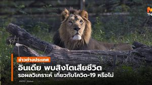 สวนสัตว์อินเดียพบ 'สิงโต' ตาย รอผลพิสูจน์ เกี่ยวกับโควิด-19 หรือไม่