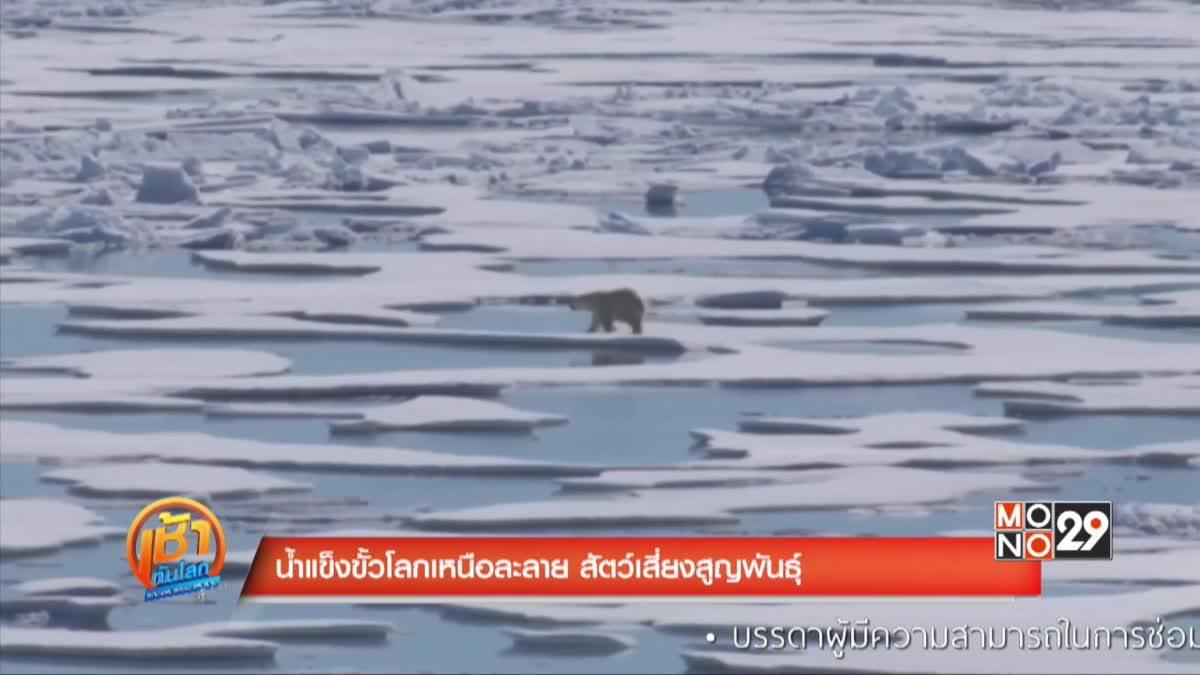 น้ำแข็งขั้วโลกเหนือละลาย สัตว์เสี่ยงสูญพันธุ์