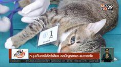 หนุนเก็บภาษีสัตว์เลี้ยง ลดปัญหาหมา-แมวจรจัด