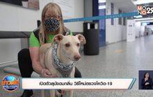 เปิดตัวสุนัขดมกลิ่น วิธีใหม่ตรวจโควิด-19