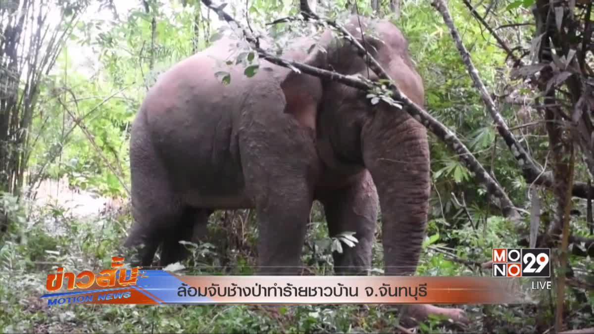 ล้อมจับช้างป่าทำร้ายชาวบ้าน จ.จันทบุรี