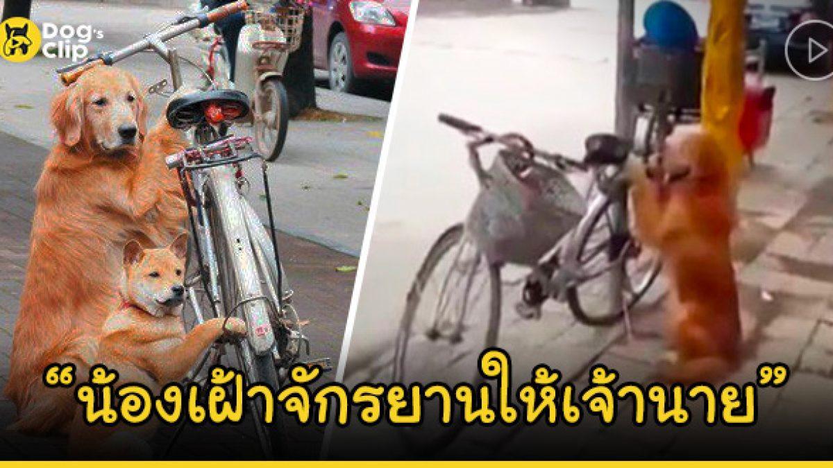 น้องหมาแสนรู้ นั่งเฝ้าจักรยานให้เจ้าของ พอเจ้าของกลับมาน้องหมารีบกระโดดซ้อนท้ายทันที