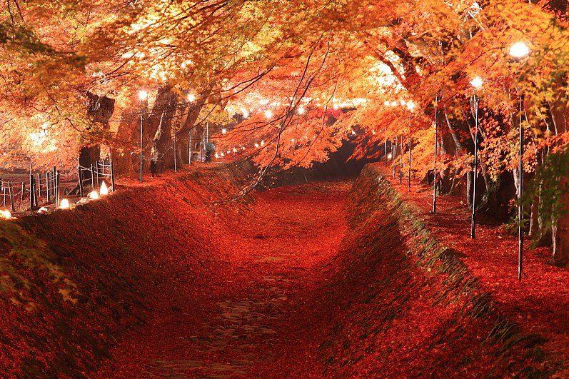 อุโมงค์ใบไม้แดง โมมิจิ ไคโร (Momiji Kairo Kawaguchiko) สถานที่ ชมใบไม้เปลี่ยนสีที่ญี่ปุ่น