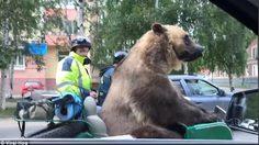 รัสเซียเองไง!! มีคนพบเห็น หมีสีน้ำตาล ตัวเบ้อเร่อออกมาแว๊นซ์พร้อมพลขับส่วนตัว