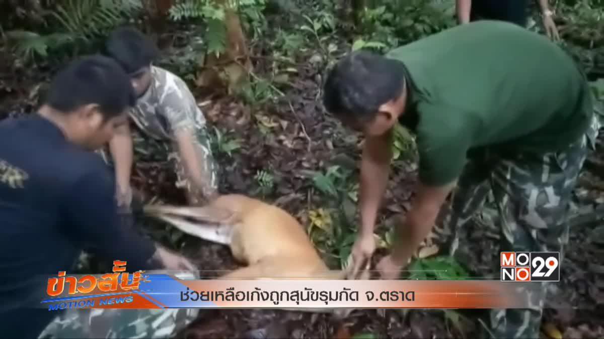 ช่วยเหลือเก้งถูกสุนัขรุมกัด จ.ตราด