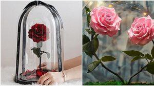 ไอเดียเจ๋ง! ของขวัญให้แฟน 'ดอกกุหลาบ' สวยงามบานสะพรั่ง ได้ยาวนานถึง 3 ปี