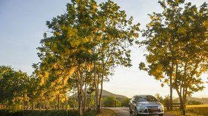 ดอกคูน บานเหลืองอร่าม ส่งท้ายหน้าร้อน ในอุทยานแห่งชาติแก่งกระจาน
