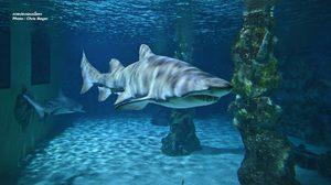 NGO เรียกร้องรัฐบาลหยุดเสิร์ฟเมนู 'หูฉลาม' ชี้การกินเท่ากับการฆ่าฉลาม
