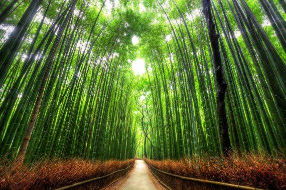 bamboo-path-japan
