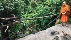 ตื่นตา! กระรอกขาวนับสิบตัว แห่กินข้าวก้นบาตรที่วัดป่าภูผาสูง