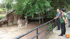 สวนสัตว์เปิดเขาเขียว พร้อมรองรับสัตว์จาก สวนสัตว์ดุสิต หลังปิดตัว ก.ย. นี้