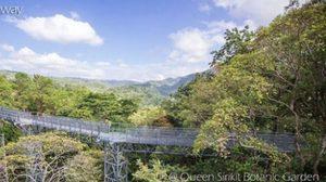 เช็คอิน! Canopy Walkway ทางเดินลอยฟ้าชมธรรมชาติแบบพาโนรามา – เชียงใหม่