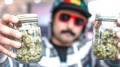 Private Cannabis Tour ที่รัฐโคโลราโด ทัวร์สำหรับสายเขียวตัวจริง!!!