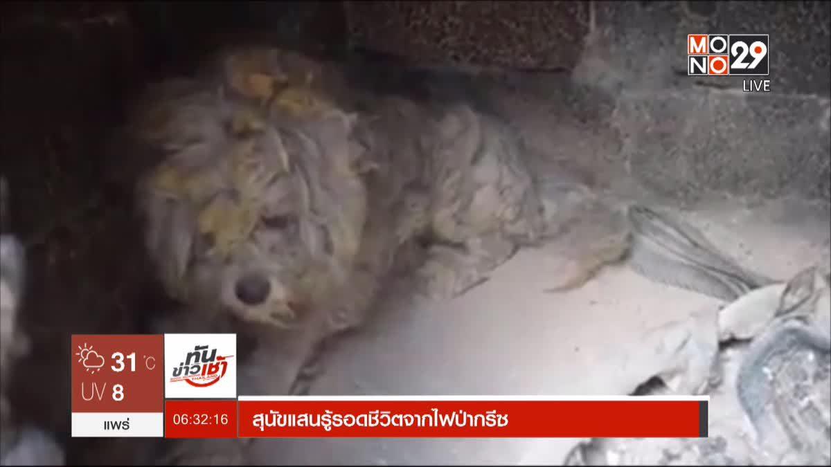 สุนัขแสนรู้รอดชีวิตจากไฟป่ากรีซ