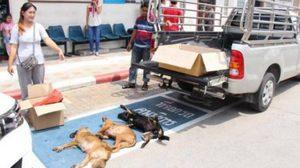น่าสงสาร! สุนัขถูกยาเบื่อตายนับ10 เร่งล่าคนใจบาปมาลงโทษ