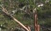 ช้างป่าทำลายพืชผล จ.สุราษฎร์ธานี