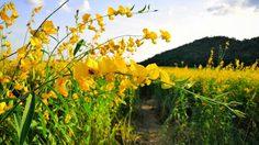 10 เส้นทางเที่ยวชม ดอกไม้หน้าหนาว ปี 2561-2562