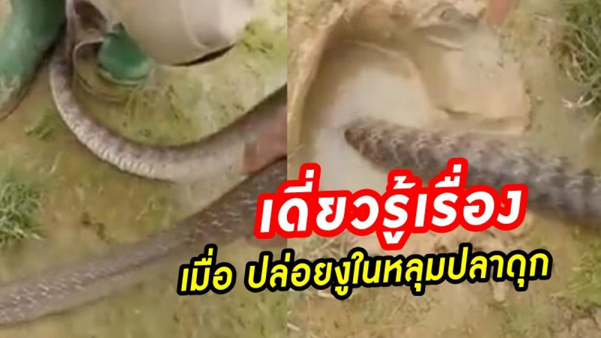 จะเกิดอะไรขึ้น! เมื่อ ปล่อยงูเข้าไปในหลุมปลาดุก สิ่งที่ได้เวิร์คจริงๆ